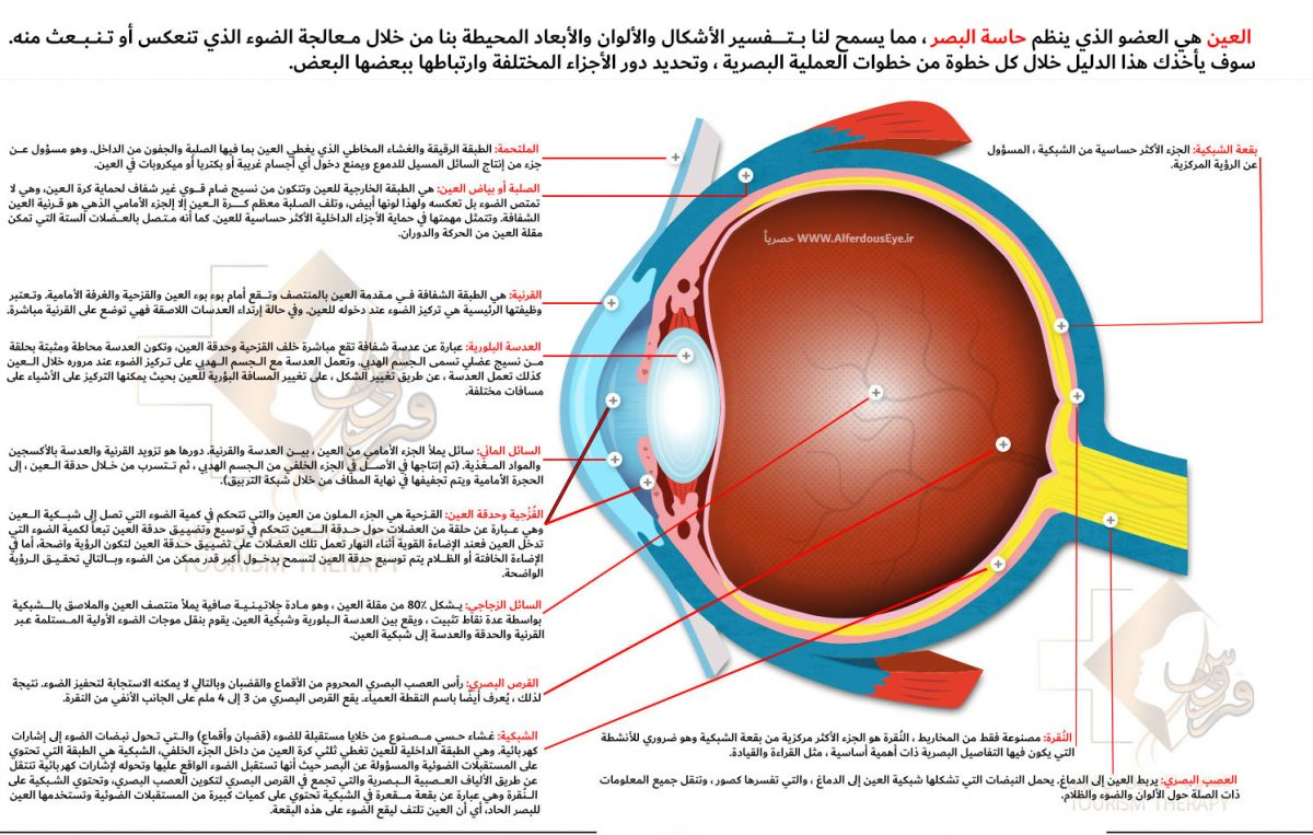 Anatomy-of-the-eye-1200x763.jpg