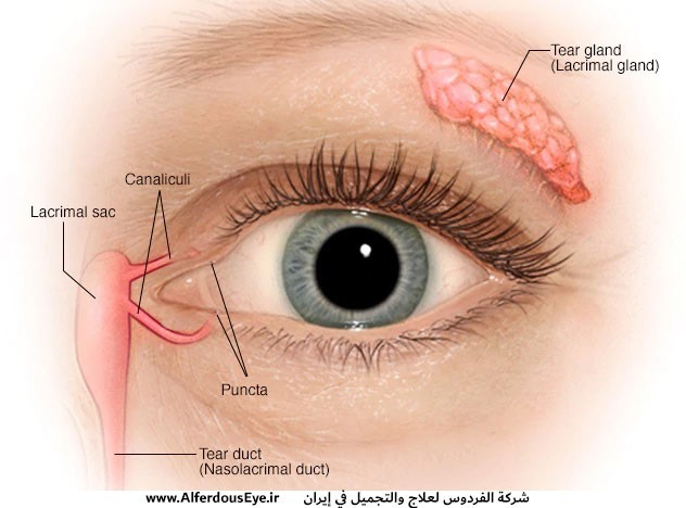 Adult-lacrimal-duct-obstruction-surgery.jpg